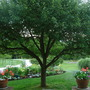 small garden view--August 15 2012