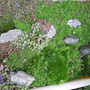 15 year old sink garden