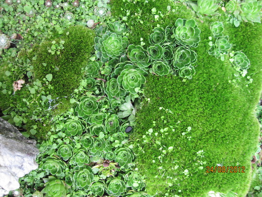 Close up of moss and friends or weeds!
