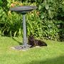 Spike guarding the bird bath!