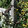 Grapevine Wreath on fencepost