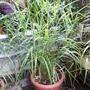 Grass_1_120826