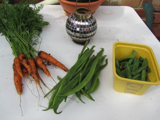 1st crop