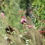 Tulln_gardens_066