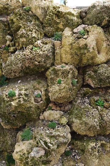 Newly planted tufa wall