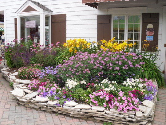 Lovely bright mixed flower bed