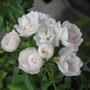 Zahrada_001