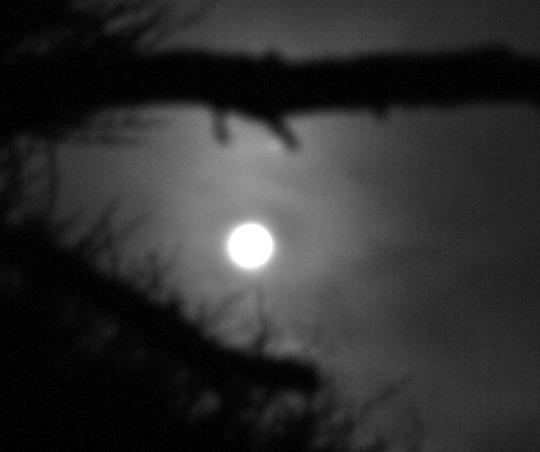 Blue Moon...?