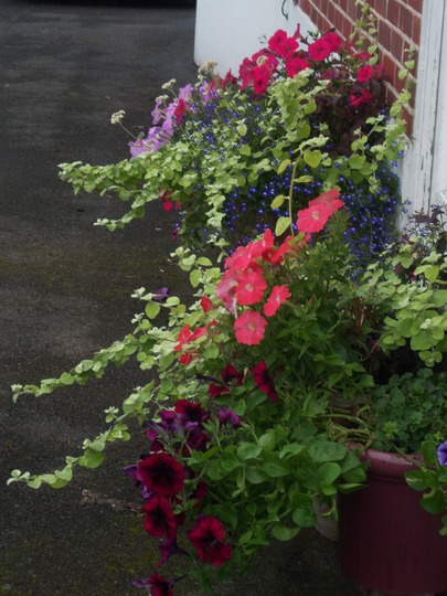 Pots by the front door