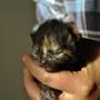 Kitten No 3