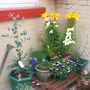 Lilies, eucalyptus, guara