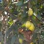 Quail_botanical_gardens_09_04_12_13_
