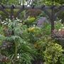 Lower garden perennials