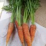 Carrots (Chantenay Red Cored 2)
