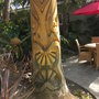 Washingtonia robusta - Mexican Fan Palm with Face Carving (Washingtonia robusta - Mexican Fan Palm)