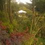 woodland walk . bank