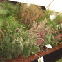 Grasses at the AG show