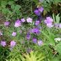 Gardenmove1_162recropgoy