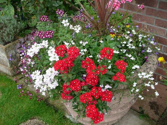 10 9 2012 Val Garden 005