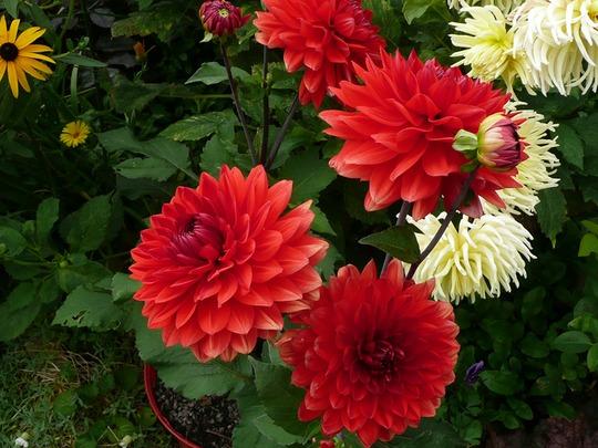 10 9 2012 Val Garden 007