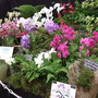 A display of orchids at the AG show