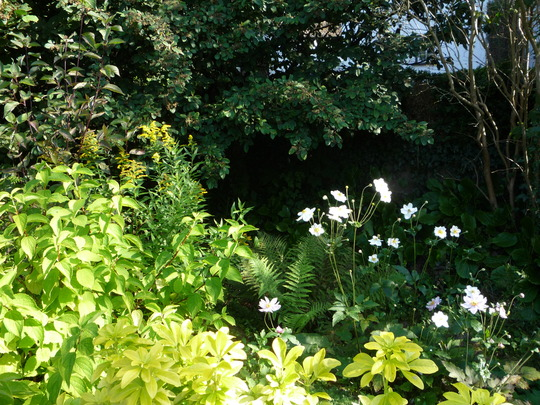 A corner of the front garden with Japanese Anemone