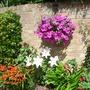 my garden august 2012