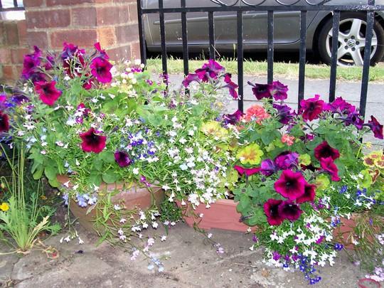 Front garden - summer pots