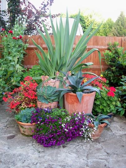 Front garden display 2008