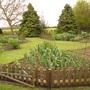 Bunny_proof_garden