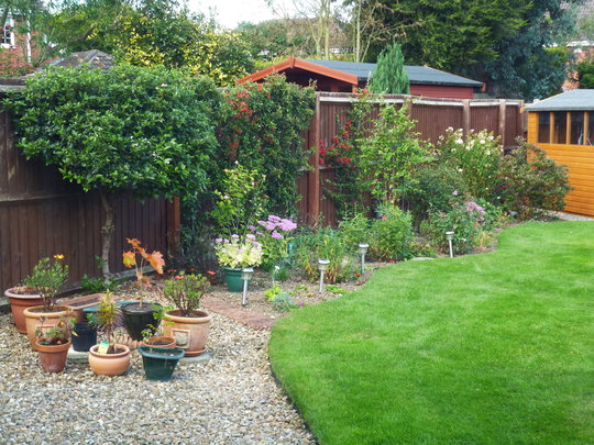 left hand side border, looking a bit sparse, penstemons have finished and carnations as well
