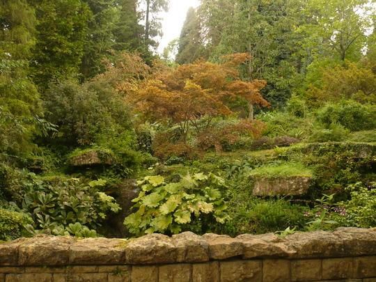 bitsford arboretum