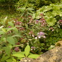plants at bitsford