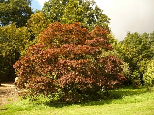 trees at bitsford