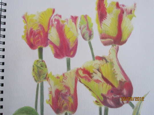 Parrot Tulip. Name unknown. For Lindak.