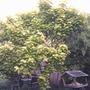 tree 009
