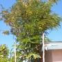 Plant_pics_09_27_12_11_