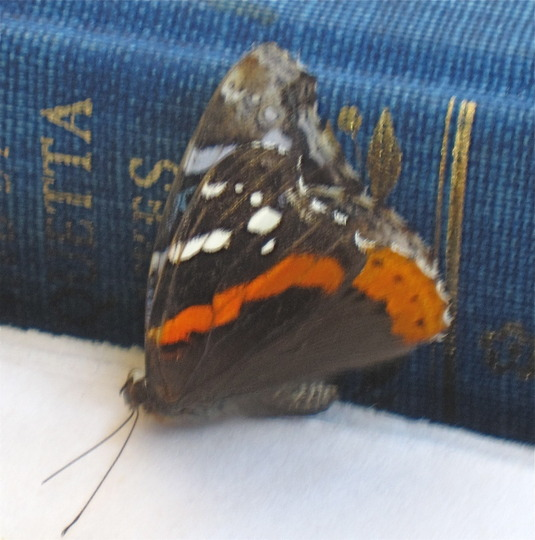 Butterfly and Book