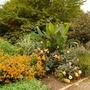 Hot Bed at Oxford botanic gardens