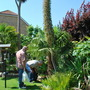 Jayne&#x27;s Echium.........another tropical for Meanie and those who like statement plants!! (echium)