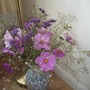 Cosmos, Verbena Bonarensis and pink Gypsophilla from the cutting garden.