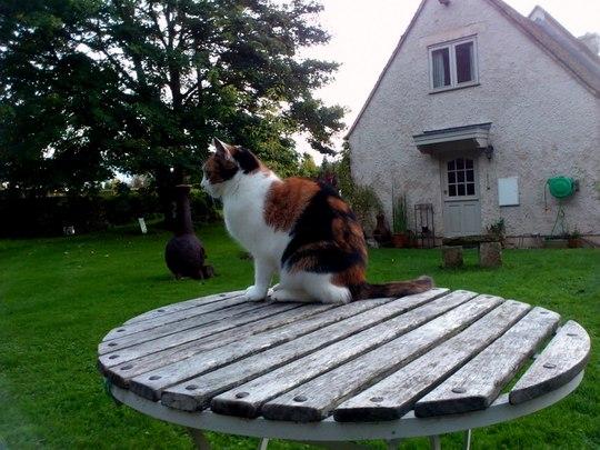 Millie Puss