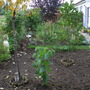 New extended Veg Plot