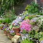 our raised rockery