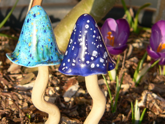 Are they mushrooms or toadstools? :)