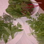 Herbs from my garden