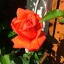 Abdul_s_pictures_016.jpg