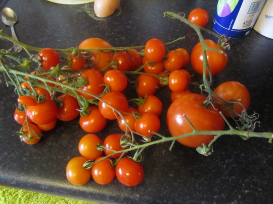 Last of the Tomatoes...
