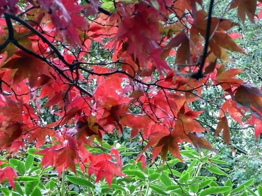 Autumn 022