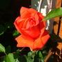 Abdul_s_pictures_015.jpg